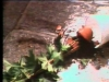 plante03d